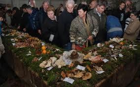 Izložba gljiva u Nedešćini