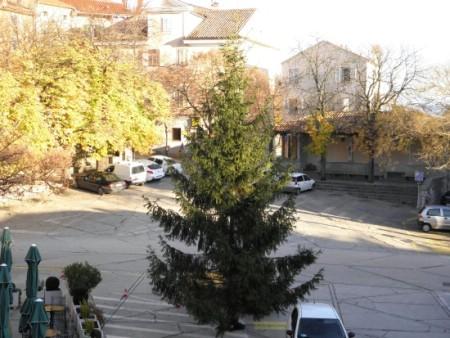 Sandro Bojić darovao božićnu jelku