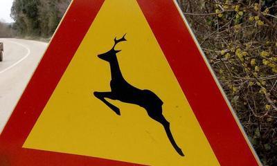 Oprez na prometnici Pula - Labin: Vozačica iz Raše (25) naletjela na divljač