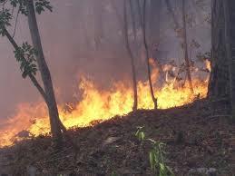 Državna uprava za zaštitu i spašavanje lani evidentirala 3.705 požara