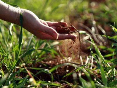 Hoće li Labinština dobiti poljoprivrednog redara?