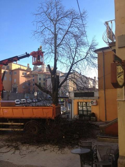 Oblikovanje krošnji starih kestena na labinskom trgu izazvalo tugu kod građana