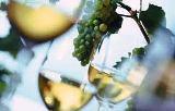 Barbanci počinju sa smotrama vina
