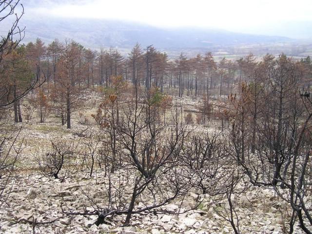 Pojačan oprez zbog suše, Istra se prati preko 29 kamera