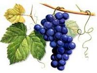 U ožujku stručno osposobljavanje vinogradara i vinara