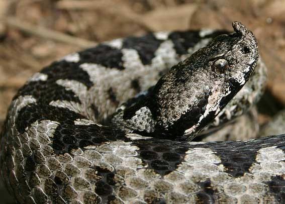 Izletnici oprez, zabilježene najezde zmija