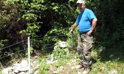 Plominska gora: Medvjed rastrgao pet ovaca - 200 m iznad prometnice Labin - Rijeka