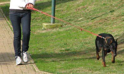 Kršan: Pas ugrizao 37-godišnjaka na biciklu - prijava vlasnici / Policija upozorava: Držite kućne ljubimce pod nadzorom
