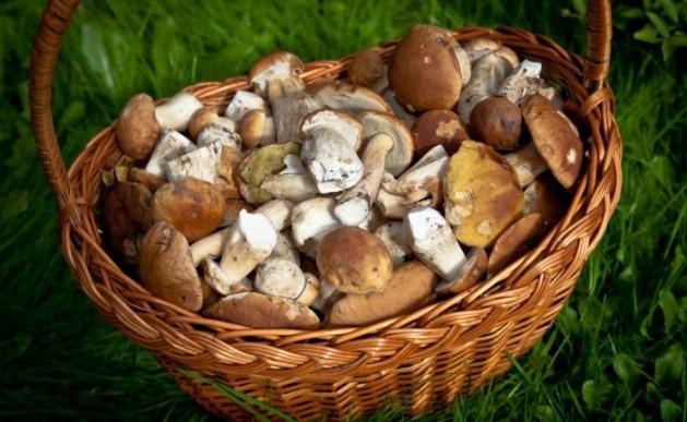 Pazite na kazne: Za branje gljiva potrebna vam je dozvola