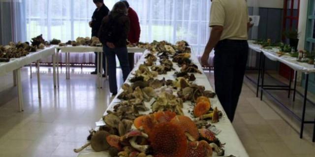 Labin: Izložba gljiva i samoniklog začinskog bilja