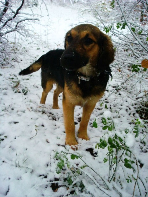 Štand udruge za zaštitu životinja Fenix na festivalu Vakove zimi ni!