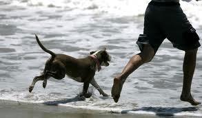 U Rapcu plaža za kućne ljubimce
