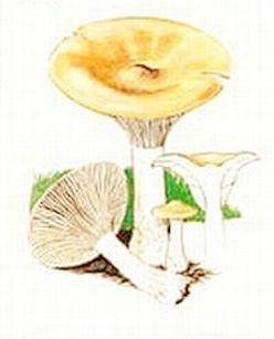 Labin - Počinju gljivarska dežurstva