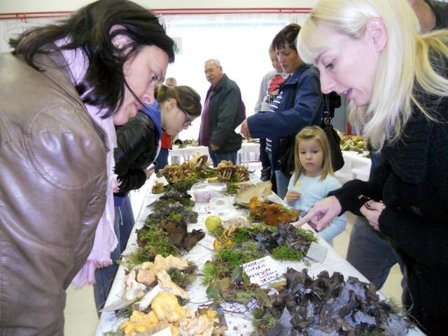Labin: Bablje ljeto za pun stol gljiva