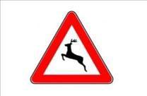 Pazite na divljač na cesti
