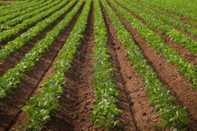 Zakup državnog poljoprivrednog zemljišta na području Labinštine za 421 kn