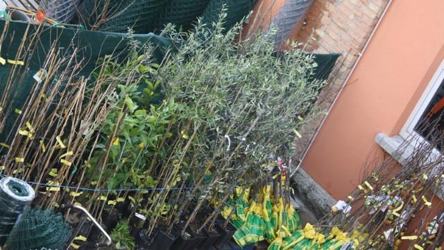 """Udruga """"Agro Sveta Nedelja"""" i ove godine organizira nabavu sadnica vinove loze i maslina"""