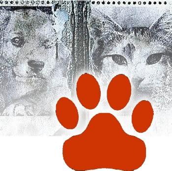 VAŽNA OBAVIJEST vlasnicima pasa i mačaka zbog pojave BJESNOĆE u mjestu Brovinje!