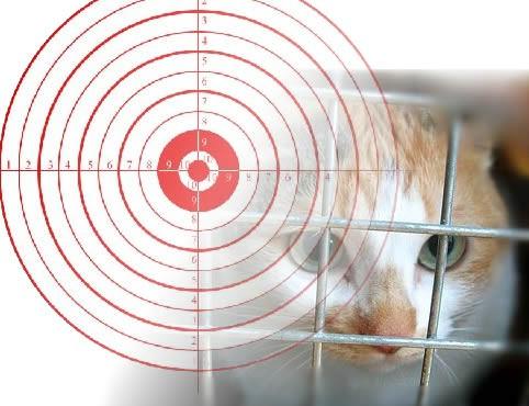 Raša najavljuje uklanjanje pasa i mačaka lutalica