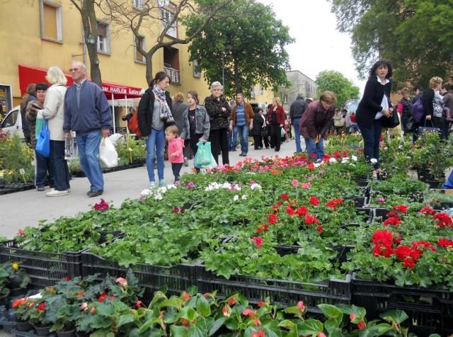 6. Sajam cvijeća u Labinu okupio 20-ak izlagača