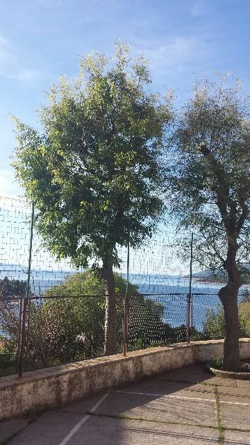 Rabac: Dezinsekcijsko tretiranje stabala ladonje protiv gusjenica u Rapcu u ponedjeljak 12. svibnja 2014. godine