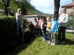 Povodom Dana Europe učenici raške osnovne škole posadili Judino drvo
