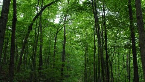 [Poziv na javni uvid i javnu raspravu šumoposjednicima] U tijeku izrada Programa za gospodarenje šumama šumoposjednika i to za privatne šume na području Grada Labina i Općine Raša