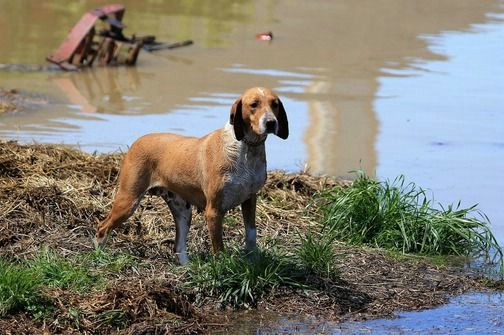 Pomoć za životinje otpremljena u Osijek
