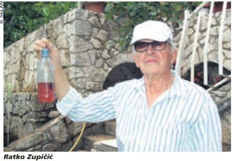 Stršljena je u Istri sve više, ali još uvijek samo domaćih