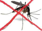 [Obavijest] U četvrtak zamagljivanje protiv komaraca na području Raše, Viškovića i Koromačna