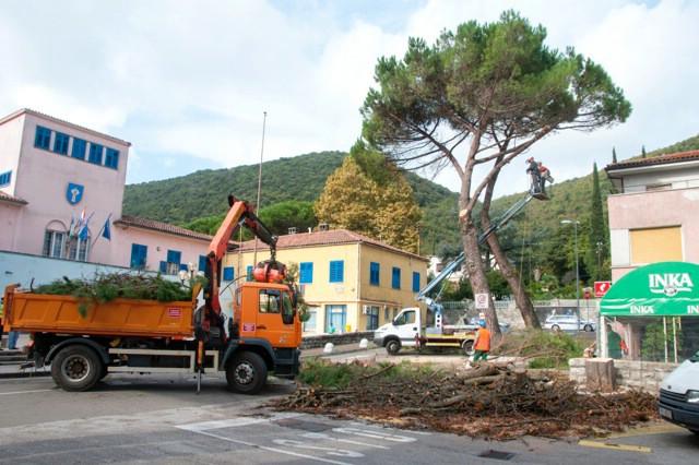 Nastavlja se akcija održavanja stabala u Raši