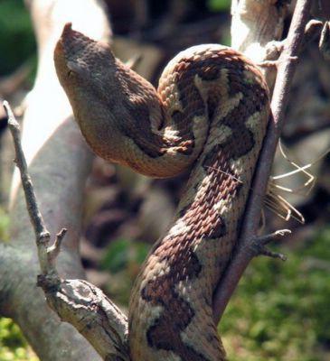 Šparugari, oprez - zmije i krpelji vrebaju!