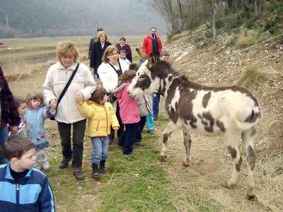 Hrvatski stočarski centar: Klanje magaraca je kažnjivo