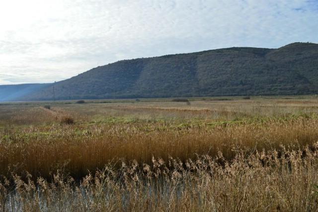 Raša: Na 265 hektara oživjet će žitarica Bonifika