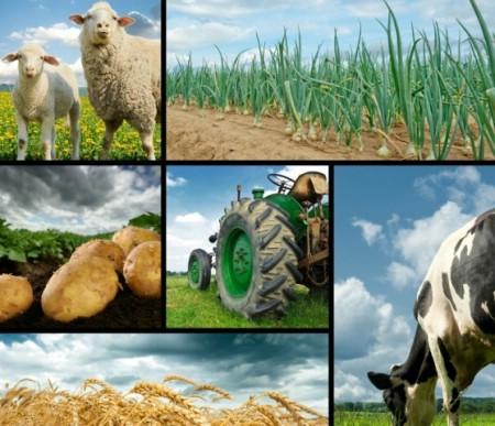 Otvoreni natječaji za podmjere 4.1. i 4.2. Programa ruralnog razvoja
