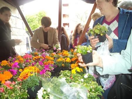 Labinjani dobili sadnice cvijeća na dar
