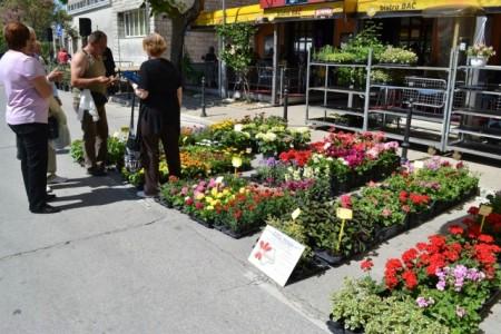 7. Sajam cvijeća u Labinu