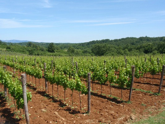 Poziv na edukciju: `Prezentacija natječaja iz Podmjere 6.3. - Potpora razvoju malih poljoprivrednih gospodarstva i Vinske omotnice`
