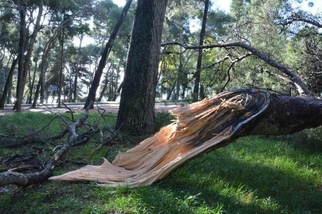 I na Labinštini jak vjetar lomio grane i rušio stabla