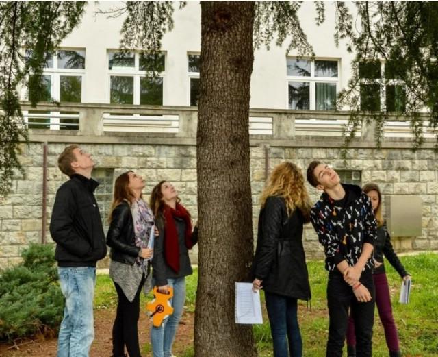 U labinskoj Srednjoj školi Svjetski dan zaštite stabala posvećen cedru