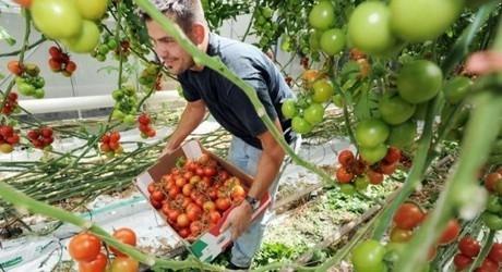 """Poziv na radionicu: """"Program ruralnog razvoja Republike Hrvatske 2014.-2020. - Što poljoprivrednici trebaju znati za uspješnu prijavu na natječaje?''''"""