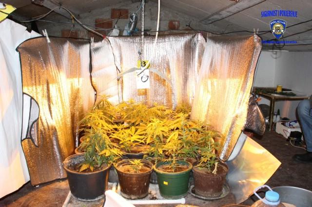 Labin: Pronađen improvizirani laboratorij za uzgoj marihuane