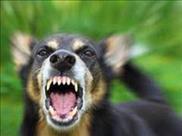 Cere: Pas ugrizao poštara