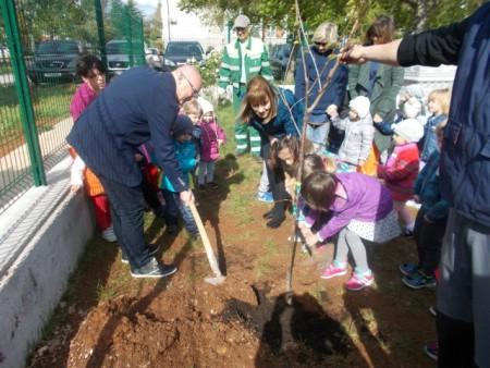 Provedena eko akcija `Usvoji drvo`