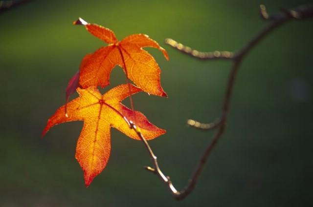 Danas stiže jesen u 17:44!