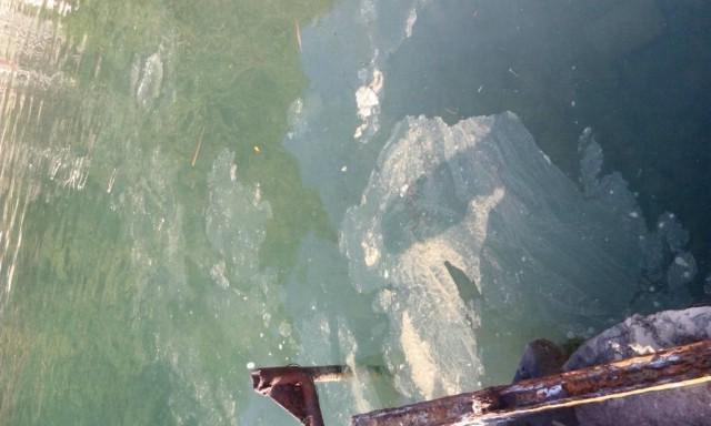 Trget: Prepuna plaža kupača, a more zagađeno
