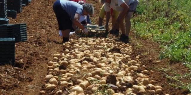 Potpore razvoju malih poljoprivrednih gospodarstava iz Pićna i Svete Nedelje
