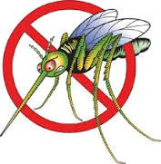 Općina Kršan: Obavijest o ponovnoj dezinsekciji komaraca