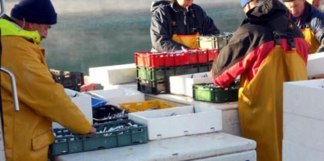 Plomin Luka: Više neće biti ostataka ribe, smrada i mreža