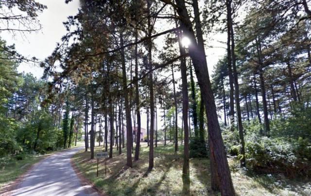 Mještani Malih i Velih Golja protive se namjeri Hrvatskih šuma o sječi tamošnje borove šume